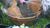 přípravě : Place Dirt in Hanging Basket. 2 shots. 1st shot is a close up on the hanging basket as gardener places soil in. 2nd shot is the camera dollying in while person places potting soil in basket