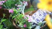 неузнаваемый : Packing Hanging Basket. Gardener packs in soil on flowers in coco liner hanging basket. slow motion