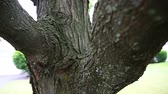 ladrão : Macro Move Down Tree. camera slowly moves down a tree. starts on macro shot of limb down the trunk. rack focus Stock Footage
