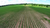 milharal : Corn Field Fly Over. camera flys over a new corn field on a sunny day. aerial footage. slow motion.