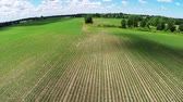 milharal : Farmland Aerial. camera flys over a newly planted cornfield. aerial footage. slow motion Vídeos