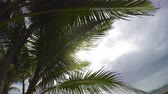 olhar : Sun Through Palm Tree. camera looking up at sun through the palm trees. hand held Stock Footage