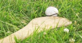 se movendo para cima : Hurley and Ball Close Up. camera dollies right on a close up of an irish hurley and sliotar in a grass field