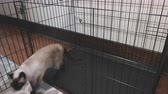 rohy : Cat Sniffing Large Kennel and Walks Out. camera moves left with a cat in an overly large kennel. The cat sniffs and inspects the kennel, then walks out
