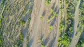 горная вершина : Aerial Looking Down on Desert Sand and Plants. an above shot looking down on desert sand and plants