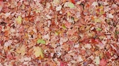 ropogós : Leaves Overhead on Grass Rising Up From A Pile. view is wide overhead and moves away from a bunch of fallen leaves on grass in a yard