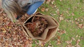 грабли : Picking Up Leaves and Placing with Move Into Bag Overhead. view is low and rises from overhead as a woman picks up a pile of leaves, follows as she places into a bag then view moves down into bag Стоковые видеозаписи