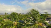 mesafe : Aerial Rising Over Two Palm Trees Hawaii. aerial view revealing mountains of Oahu Hawaii from two palm trees