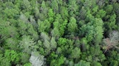 baldachýn : Forest Tree Top Aerial Looking Down. an aerial view flying over tree top canopy of a forest looking down
