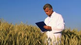 checagem : Mature technician holding and examining a wheat ear during a quality control in field. Mature man checking the quality of the harvest and looking at camera. A man with the white coat controls the grain growth and writes on a documet.