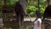 comovente : Young woman traveler feeds the elephant