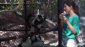 catta : Woman feeding Indri lemurs in the zoo