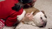 corações : charming asian girl loves and caresses a cute funny bulldog under the Christmas tree. kisses his dog. Christmas. New Year. The concept of advertising. suitable for christmas promotion Stock Footage