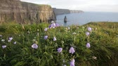 campanário : Footage of Cliffs Of Moher with Harebell, wild Irish bell-shaped  flowers. Stock Footage