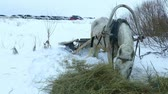 eventos : White horse and sleigh in winter near forest