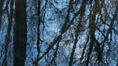 ルックス : Trees against the blue sky are reflected in the spring streams