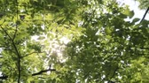 tremulação : Sunlight filtering through the leaves of trees