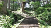 yamagata prefecture : Stone steps of Mt.Haguro, Japan