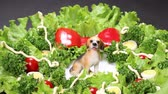 hard boiled eggs : Vegetable Christmas Wreath and dog figurine Stock Footage