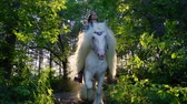A young girl is riding on a beautiful white horse in the forest.