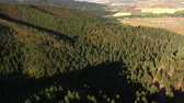 ladrão : aerial shot of fields and forests with dead trees Stock Footage