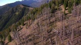 ladrão : aerial shot of forest and mountains with dead trees Stock Footage