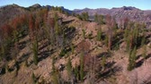 климат : aerial shot of forest and mountains with dead trees Стоковые видеозаписи
