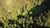 ladrão : aerial shot of forested canyon Stock Footage