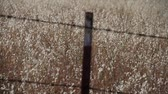 fazendas : barbed wire fence with golden grasses Stock Footage