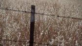 fazendas : hardware fence with golden grasses rack focus Stock Footage