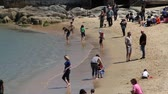 summer vacation : families play on sandy beach Stock Footage