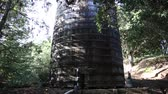 galinha : ancient wooden water tank with trees Stock Footage