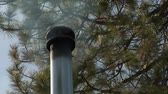 borovice : Smoking chimney on roof with pine trees