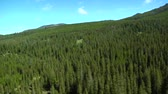 borovice : Aerial of pine forest