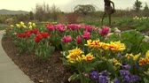 garden flowers : tulips in park