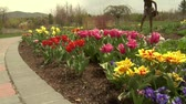 tulp : Tulpen in park Stockvideo