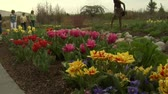tulp : dames bewonderen tulpen in Park Stockvideo