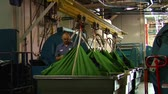 carreira : Large green bags being lifted by hydraulics Vídeos
