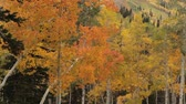 открыть : yellow aspens  blow in breeze