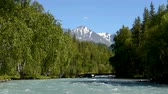 The river Kucherla flows through the forest against the background of the snowy mountains. Summer, clear sky. Vídeos