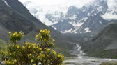 The Akkem River flows from the glacier at the foot of Belukha Mountain. In the background, snow tops. In the foreground. Flowers grow in the stream. Vídeos