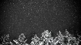 Heavy snowfall at night. Snowflakes spin in the wind. In the background grow pine.