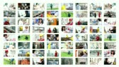 people : Collage of video clips showing people of different professions at work.