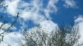 meal : Clouds passing over a blue sky. HD 1080p.