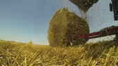 cutting in : Hay Baler in Action