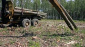 tacha : Loading Logs Of Trees In The Forest