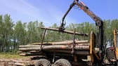 tacha : Timber Being Loaded for Transportation at a Commercial Tree Farm Vídeos