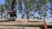 megragad : Loading Logs into the Truck - Forestry Equipment