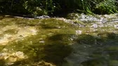 püresi : Small river in the Monti Simbruini Park, Vallepietra, Italy Stok Video