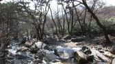 чаща : South Korea Woodland & River
